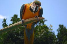 Fotografando Santa Catarina: Cuide da natureza, salve os animais.