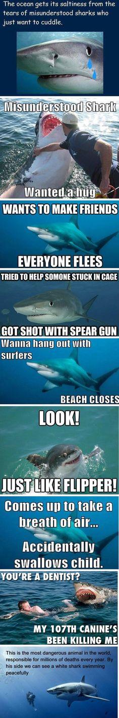 Misunderstood sharks. People kill more sharks per second than sharks kill people per year