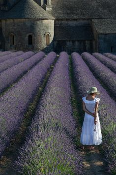 Lavender ~ Senanque Abbey ~ France Love that old house in the background