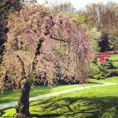 Villa Carlotta garden , tremezzo , Italy
