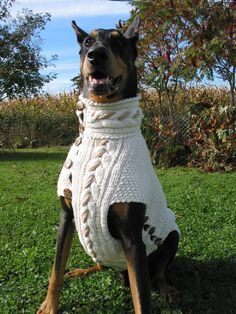 HAVANA Dog Sweater Carlo is wearing my latest creation in hand knitted sweaters of my Fall/Winter Collection , in size: L. Made in USA Cotton in cream color with a big cable design and a twisted rob in cappuccino color ,running up the hole length and Crochet Dog Sweater Free Pattern, Knit Dog Sweater, Hand Knitted Sweaters, Dog Sweaters, Large Dog Breeds, Large Dogs, Small Dogs, Dog Collar Boy, Havana