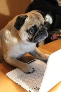 Mr. Pug found your internet browser history, and he is very disappointed