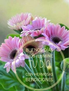 Healthy people 2020 social determinants of health research theory testing Good Day Wishes, Happy Wishes, Morning Greetings Quotes, Good Morning Quotes, Flirting Humor, Flirting Quotes, Spanish Greetings, Good Morning Inspiration, Happy Week