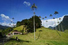 El Valle del Cocora es la primera maravilla del Quindío y el hogar de la palma de cera, árbol nacional de Colombia. ¡Ah! Y la trucha al ajillo, o en salsa teriyaki... #mochileros