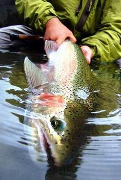 It almost looks like a painting.  #fly fishing #Steelhead