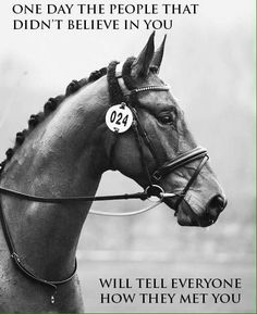 Yeah friends and family of mine, I'm gonna be an EQUESTRIAN and theres nothing you can do about it!