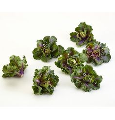 Kalettes, also known as BrusselKale and Lollipop Kale, have tall erect stems ringed with small rosettes of kalelike leaves. Their flavor is mild and nutty, growing sweeter after frost. Seeds are a ...