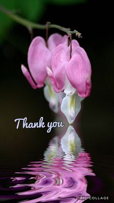 Thank You Qoutes, Thank You Messages Gratitude, Thank You Greetings, Thank You Cards, Welcome Pictures, Thank You Pictures, Thank You Images, Good Night I Love You, Good Morning Good Night