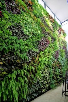 Best Indoor Plants for Tropical Home Decoration Part 22 Vertikal Garden, Vertical Garden Design, Best Indoor Plants, Garden Fencing, Plant Wall, Tropical Houses, Hanging Plants, Landscape Architecture, Vegetable Garden