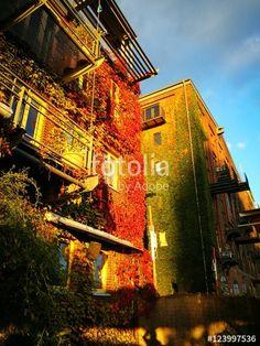 Fassadenbegrünung im Herbst in Rot und Grün an den Fassaden alter Speicher an der Hafenpromenade in Münster in Westfalen im Münsterland
