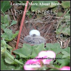 Learning More About Birds, Part 1: Nests - http://www.yearroundhomeschooling.com/learning-birds-part-1-nests/