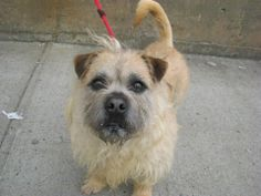 SAFE --- Brooklyn Center   JUICE - A0998509   MALE, TAN / CREAM, SHIH TZU / PIT BULL, 3 yrs  OWNER SUR - EVALUATE, NO HOLD Reason LLORDPRIVA   Intake condition NONE Intake Date 05/02/2014, From NY 11210, DueOut Date 05/02/2014  https://www.facebook.com/photo.php?fbid=797962003550014&set=a.617941078218775.1073741869.152876678058553&type=3&theater +++++++VERY FRIENDLY++++++