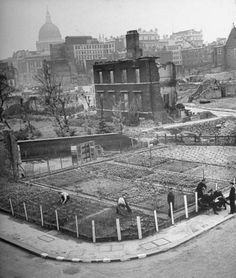 London at War, 1943: Allotments. London\'s residents cultivating vegetable garden in bombed ruins.
