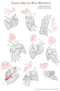 Wing-Movement Sheet 2 by Lizkay Note: The artist intends these to be arms as wings and not typical bird anatomy