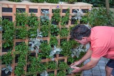 Why not include a new accessory to your backyard? Vertical Gardens are not only easy to create, but a new way to spruce up your backyard!