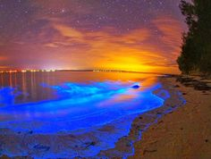 Magic Glowing Oceans - bioluminescence phytoplankton - 4 places to see dinoflagellates around the world #wednesdaywanderlust, travel, wanderlust, bucket list www.mybrownpaperpackages.com