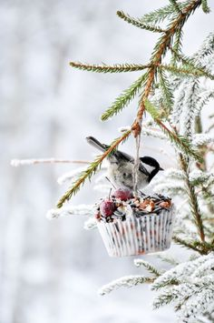 Make a winter bird feeder with these easy DIY projects and tutorials! It's easy to make a few DIY bird feeders with these garden ideas! The birds will love these DIY bird feeders! Homemade Bird Feeders, Diy Bird Feeder, Bird Suet, Beautiful Winter Scenes, Little Gardens, How To Attract Birds, Bird Food, Backyard Birds, Photo Tree