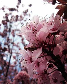 #slovenijaodkodlepotetvoje #spring #blooming #pink #flower #tree #recreation #park #river #sava #catez #cateske #toplice #spa #terme #dolenjska #catezobsavi #slovenija by cecatp