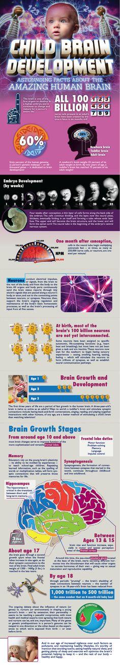 El desarrollo del cerebro de un niño #infografia #infographic