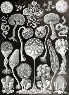 生物科學插畫站點:Biodiversity Heritage Library » ㄇㄞˋ點子靈感創意誌