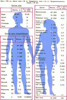 Состав тела