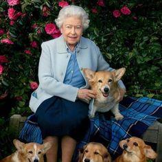 Queen Elizabeth Corgi, Prince Philip Queen Elizabeth, Hm The Queen, Her Majesty The Queen, Corgi Pembroke, Corgi Dog, Palais De Buckingham, International Dog Day, Elisabeth Ii