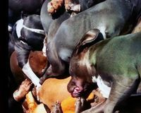 Stop Breed Specific Legislation and the massacre of innocent Pit Bulls. Please sign the petition.
