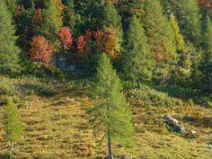 'Sonniger Bergwald im Oktober' von Rudolf Büttner bei artflakes.com als Poster oder Kunstdruck $18.03