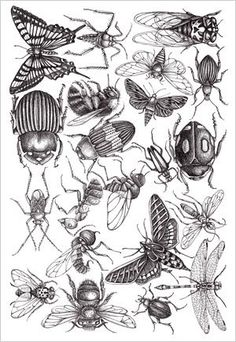 For Your Info: Insects Gravure Illustration, Illustration Art, Illustrations, Bug Tattoo, Illustration Botanique, Bug Art, Insect Art, Bugs And Insects, Blackwork