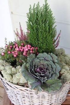 38 Inexpensive Winter Planter Ideas For Home To Try Asap