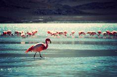 Pretty Pink Flamingos