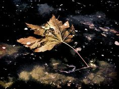 Leaf floating on water Photograph