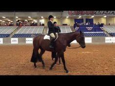 2016 AQHA Select Hunt Seat Equitation - YouTube
