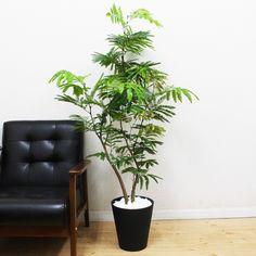Amazon.co.jp: エバーフレッシュ 観葉植物 インテリア ブラックセラアート鉢 8号 大型 中型: ホーム&キッチン Fern Plant, Green Life, Ferns, Planter Pots, Interior, Home, Fern, Indoor, Ad Home