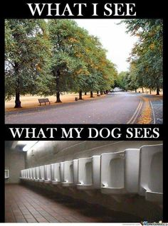 Pretty much! I think I pay a membership fee at the dog park just to give him new places beside our home to pee. He spends half his time there marking everything in sight!