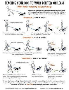 Teaching Your Dog to Walk Politely on Leash - Part 2