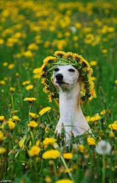floral crown, so regal.