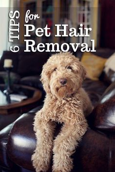 6 Tips for Pet Hair Removal | The Pet Anthology