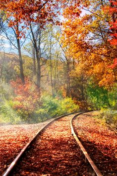 plasmatics-life:  Autumn colors | bySteve Jurell | ….(Website)