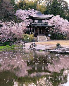 Kanshuji Temple with Sakura, Kyoto Kyoto, Kansai, …- # Kansai … - Do Garden Japanese Landscape, Japanese Garden Design, Japanese Architecture, Japanese Nature, Japanese Geisha, Japanese Kimono, Garden Architecture, Japanese Gardens, Cherry Blossom Japan