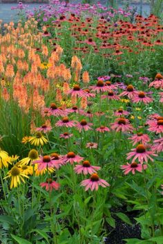 My Favorite Plant Combinations 12