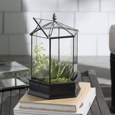 H Potter Six Sided Glass Terrarium Valentine Gift Idea Herb Container Succulent Garden Planter Wardian Case Glasshouse Geometric Terrarium For Sale, Large Terrarium, Orchid Terrarium, Succulent Terrarium, Hanging Terrarium, Garden Planters, Succulents Garden, Indoor Garden, Container Flowers