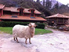 A buen bocado: Asturias