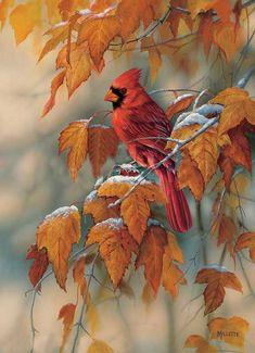 Artiste Animalier - Rosemary Millette - Cardinal rouge sur un arbre aux tons d'automne