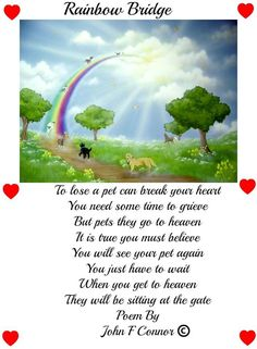 815cd2b7320d0f58489e1ee0285dffb0--pet-grief-spiritual-thoughts.jpg 705×960 pixels