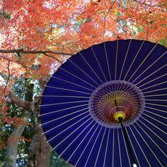 Fall | Tsujikura (The Japanese umbrella, The Japanese lantern, Akari) Kyoto