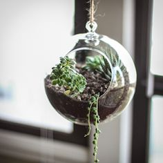 DIY guide on how to make your own succulent terrarium and/or planter.