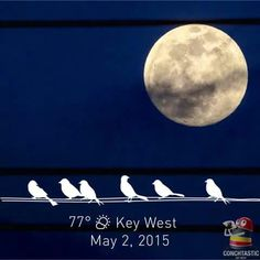 key west memorial day weekend specials