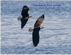 Sasse Photo -  Eagle pair flying