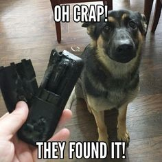 I don't miss these days... But I sure do love my GSD fur babies!